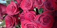 červené ruže vždy potešia
